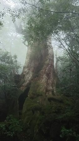 Jomonsugi: DSC_0697_large.jpg