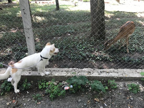 Karnobat, Bulgaria: In the corner of the park attached to the hotel there is a small zoo