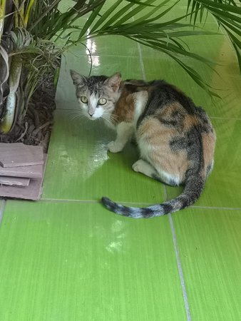 Sustainable Bolivia: The cat of the house