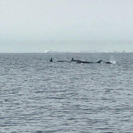 奥卡斯岛观鲸照片