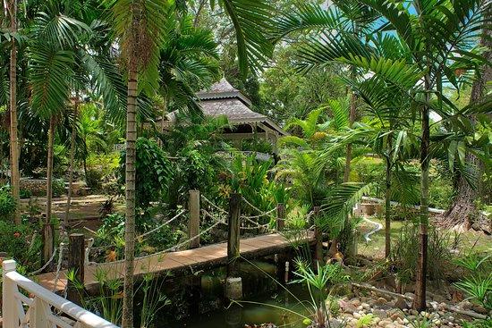 Hibiscus Lodge Hotel: Garden Area