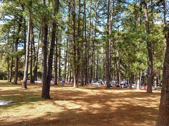 Jardim Botânico de Brasília: Bosque do parque