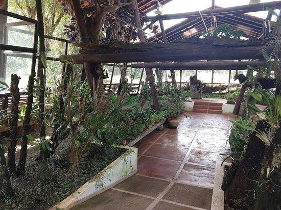 Jardim Botânico de Brasília: Orquidário