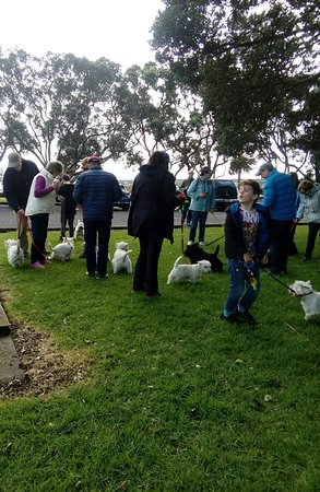 Mangere, Nova Zelândia: West Highland and Scottish Terrier club, one of the many groups who meet to walk Kiwi Esplanade