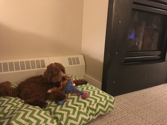 Limelight Hotel Aspen: Puppy right at home on his dog bed!