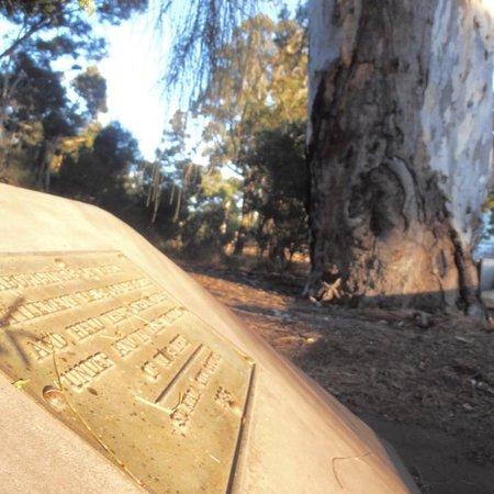 St Kilda, Australia: Ngargee Tree
