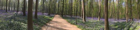 Halle, Belgia: 1時間程歩いた先の風景