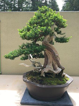 Best Free Bonsai Trees In Pacific Northwest Bonsai Tree