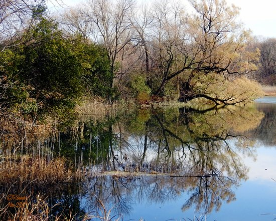 Montezuma National Wildlife Refuge: Many times you get to see some pretty reflections too!