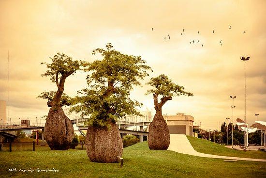 Villa Maria, Argentinien: Palos Borrachos en el Parque de la vida