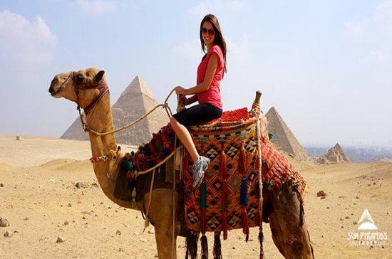 キャメルライドやピラミッドの周りの馬