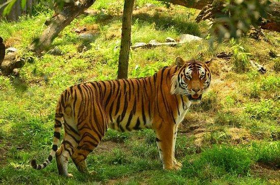 Panna Tiger Tour Tour da Khajuraho