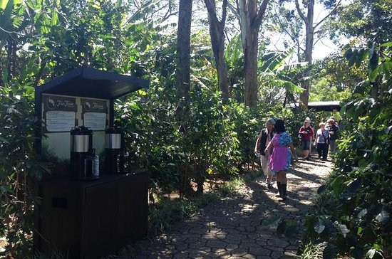Diamante Coffee Tour desde San José