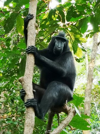 Tangkoko Research Station: Langmütig lässt sich das Tier ablichten