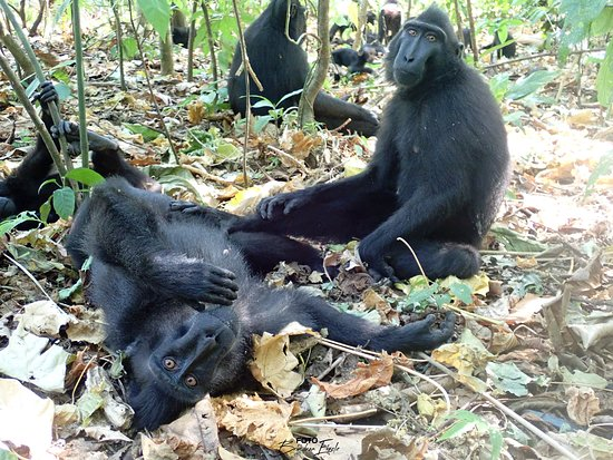 Tangkoko Research Station: Die Tiere beobachten uns genauso wie wir sie