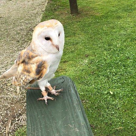 Screech Owl Sanctuary: photo0.jpg