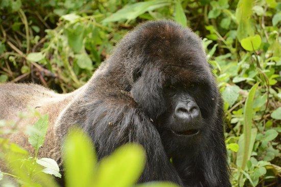 ルワンダ: 写真