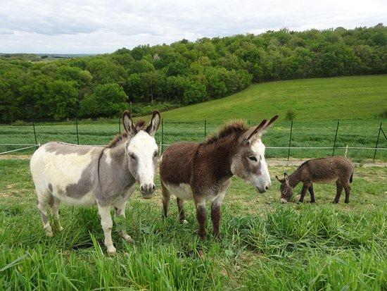 Gers, فرنسا: âne