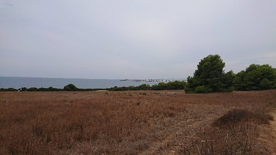 Punta de n'Amer: DSC_0067_large.jpg