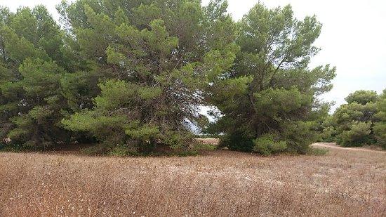 Punta de n'Amer: DSC_0065_large.jpg