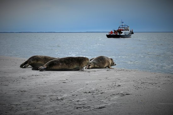 Dutch Seal Tours