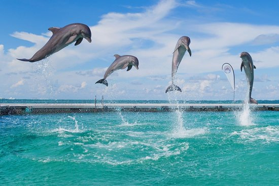 Dolphins and Stingrays