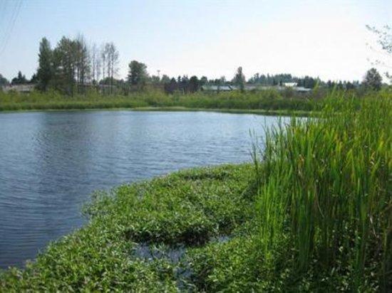 Totem Lake Hotel: View of Totem Lake