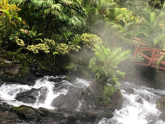Tabacon Hot Springs: received_1916428681995385_large.jpg