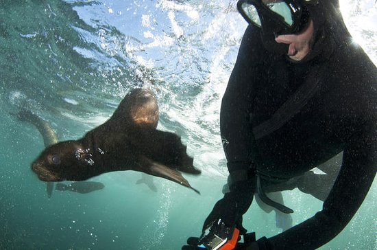 Seal Snorkeling with Animal Ocean
