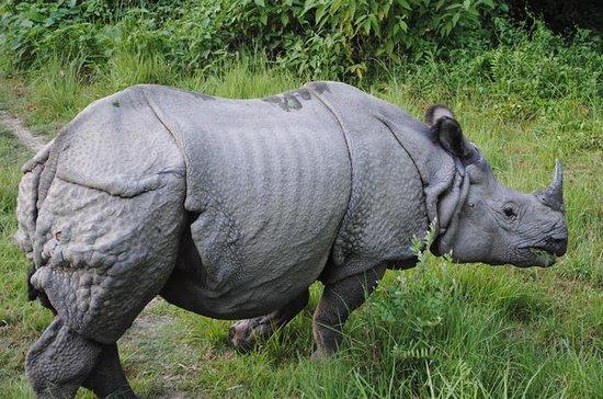 Rinoceronte e Tiger Safari a Dudhwa