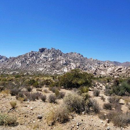 Mojave National Preserve: photo0.jpg