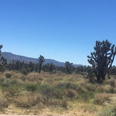 Mojave National Preserve: photo1.jpg