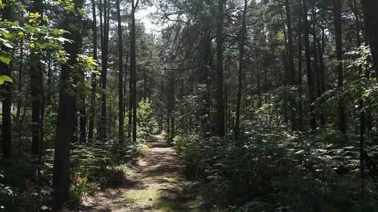 Sciezka Przyrodnicza Zyzne Lasy z Orlica