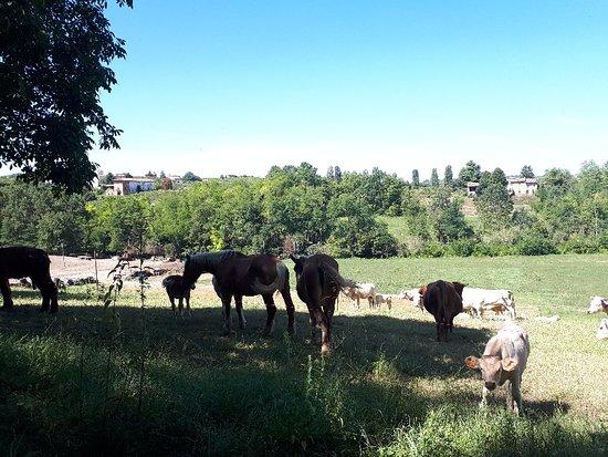 Castiglione Tinella, إيطاليا: 20180826_120635_large.jpg