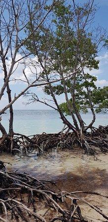 Cayo Jutia Beach: 20180728_160149_large.jpg