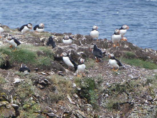 ‪The Elliston Puffin Site‬