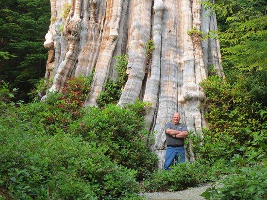 The Duncan Cedar