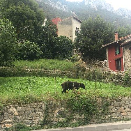 Trescares, Espanha: photo2.jpg