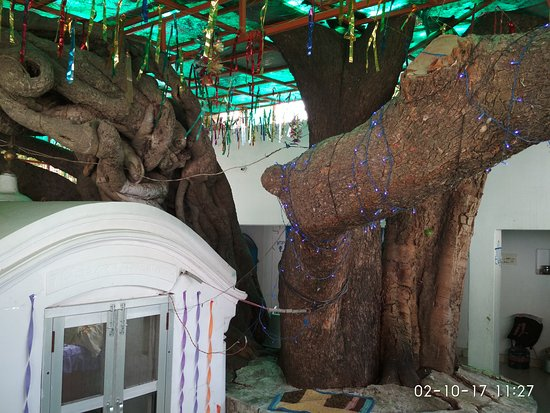 Raipur Rani: Guru Gobind Singh ji tied his mare to this tree