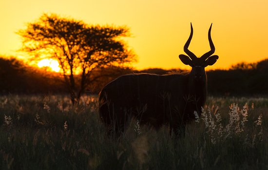Unearth Safaris - Birding & Wildlife Excursions