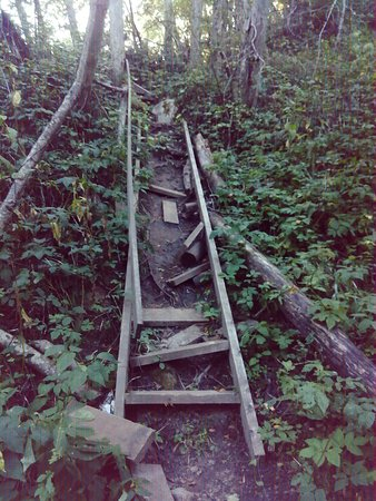 Vologda Oblast, روسيا: Одна из лестниц на спуске