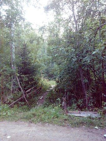 Vologda Oblast, روسيا: Вид с дороги на поворот к водопаду
