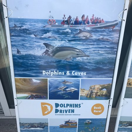 Dolphins Driven : photo3.jpg