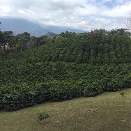 Nanegalito, Ecuador: photo4.jpg