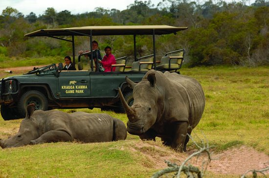 2-Hour Guided Game Drive at Kragga...