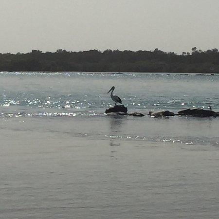 Urunga, Australia: photo3.jpg