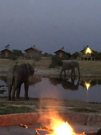 Nata, Botswana: Elephants at the waterhole, after dark