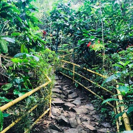 Planet Green Plantation Resort: photo0.jpg