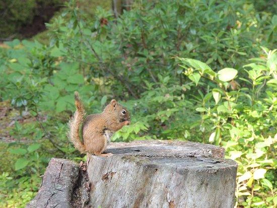 Saint-Henri-de-Taillon, Canada: Mignon petit invité au moment du souper