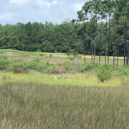 Carolina National Golf Club ภาพถ่าย